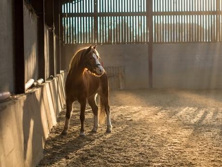paard in stal klein