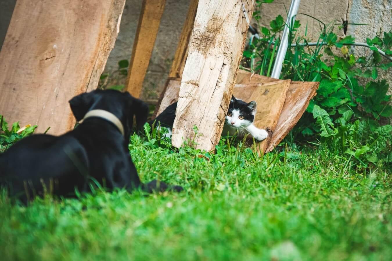 Hond en kat buiten